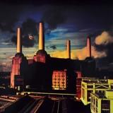 Pink Floyd - Animals (japonês/colorido) LP